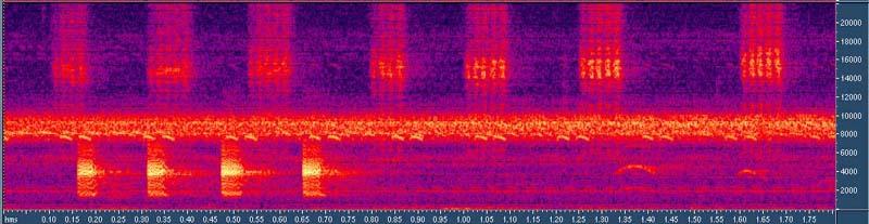 Utiliser les outils de son pour suivre un entraînement en endurance SumatraoriginalK713